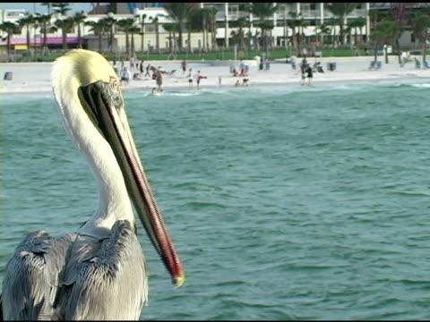 Pelican 2 NTSC video