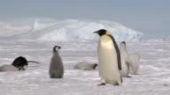 penguin walking rl pan video