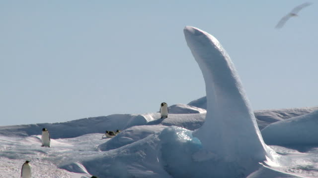 penguins sliding down the hill video