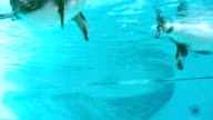 Penguins swim in the pool, funnny, joy video