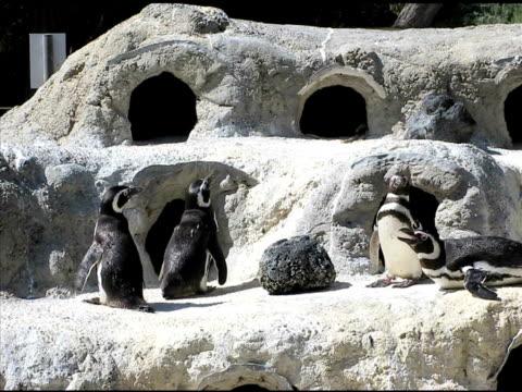 Penguins (NTSC) video