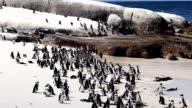 Penguins video