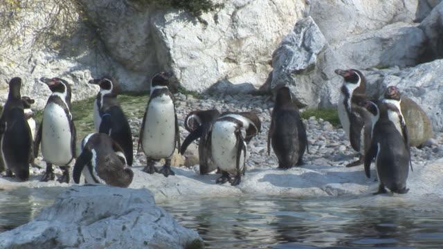 penguins3 video