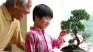 Penjing Grandfather and Grandson Bansai video