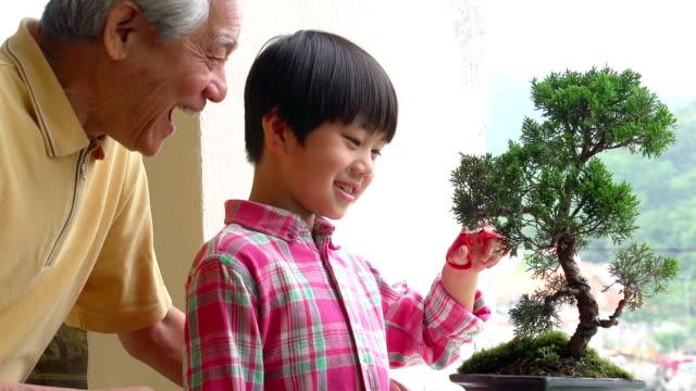 Penjing Grandfather and Grandson Bansai video