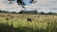 Pennine Dairy Farm video