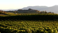 Penticton Naramata Okanagan Valley Vineyard video