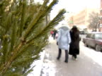 People and fur-trees. video