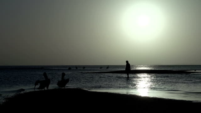 People and Pelicans on the beach during sunrise in Monkey Mia SharkBay National Park video