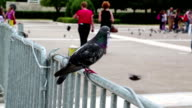 People and pigeons video