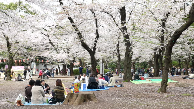 People celebrating the cherry blossom in Tokyo video