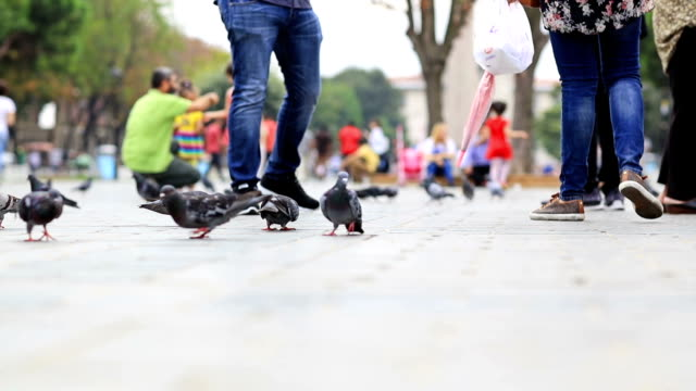 HD: People feeding birds in Sultanahmet Square, Istanbul video