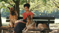 People, girl, pets, dog sitter with alsatian dogs in park video