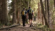 People hiking on a forest path video