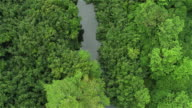 AERIAL: People kayaking on quiet jungle river in dense rainforest in Hawaii video