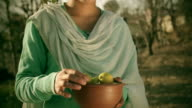 People of Himachal Pradesh: Beautiful young woman collecting lemon. video