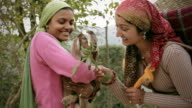People of Himachal Pradesh: Beautiful young women with goat kid video