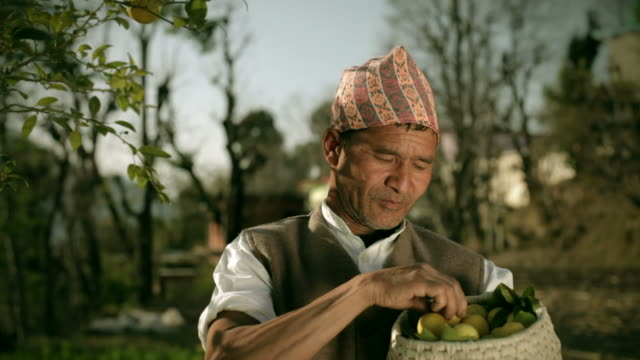 People of Nepal: Happy farmer collecting fresh lemon video