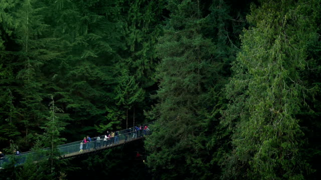 People On Walkway High In The Trees video
