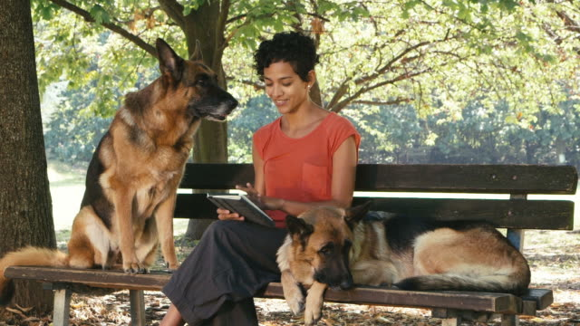 People, pets, dog sitter with alsatian dogs in park video