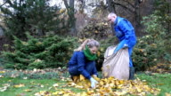 People pick leaves in autumnal park. video