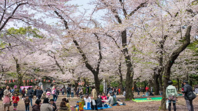 People relaxation with the cherry blossom in Tokyo Japan video
