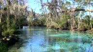 People snorkeling in a spring video