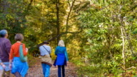 People Strolling on Hiking Path in Blue Ridge Mounains, NC video