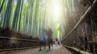 People visiting the Bamboo Forest video