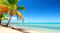 Perfect Caribbean Blue Sea and a Palm Tree video