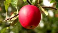 Perfect fresh apple video