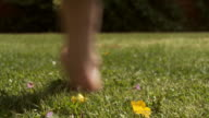 Perfect garden lawn or meadow video