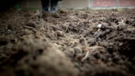 Person digging in garden video