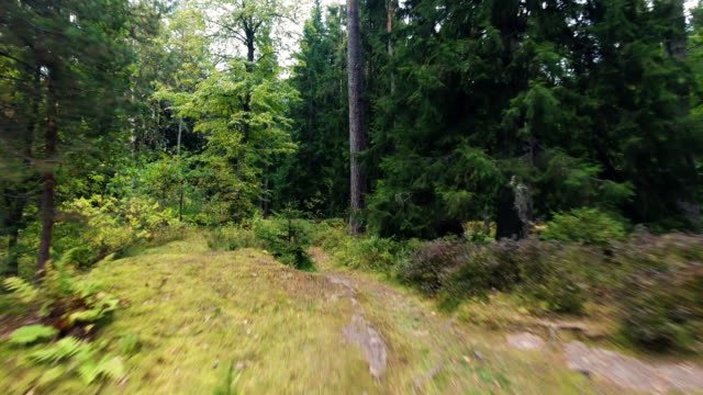 Personal perspective of walking on a path in the forest. video