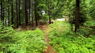 Personal perspective of walking on path in the pine forest video