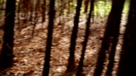 Personal perspective. Person walking, hiking through woods, forest. Autumn. video