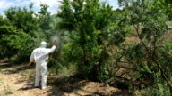 Pesticides in Olive Trees video