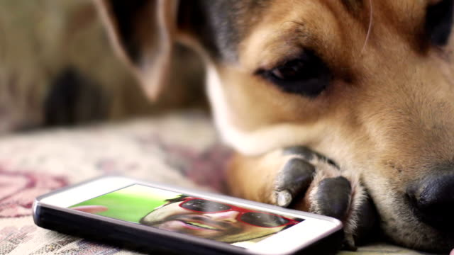 Pet Dog owner video chats over smartphone with sad puppy who misses him video