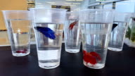 Pet store window display with exotic tropical fish for sale in clear plastic cup video