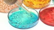 Petri dishes cultures video
