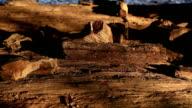 A petrified tree trunkin thailand video