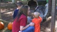 Petting Zoo video