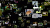 Photo stream of animals moving UP, seamless loop video
