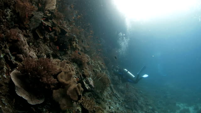 Photographer captures the photo of coral reef video