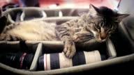Photographer's cat video