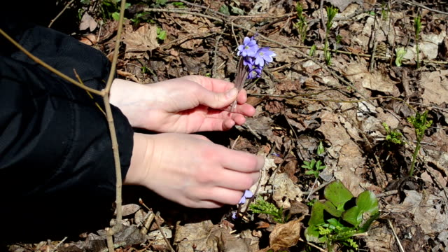 pick forest flower video