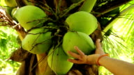 Pick up green coconut video