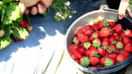 Picking a strawberry video