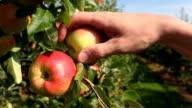 Picking an apple video