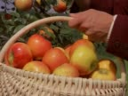 Picking apples from tree into basket video